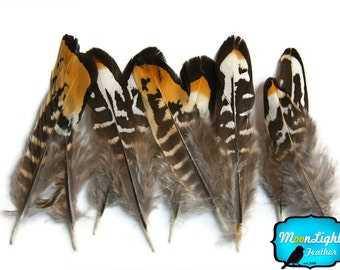 Feathers, 6 Pieces - Golden Yellow Reeves Venery Pheasant small Quill feathers : 303