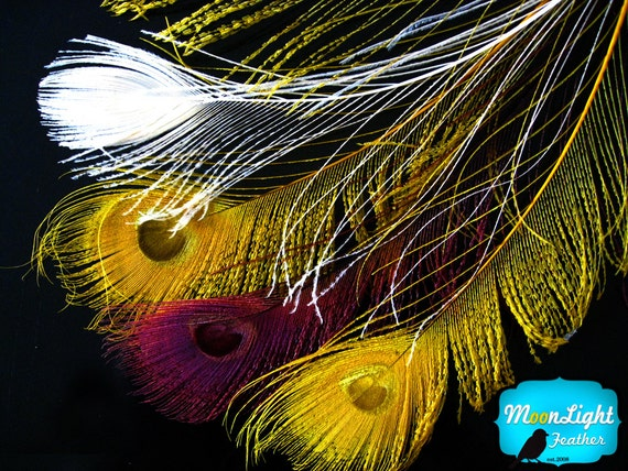 5 pieces - GOLDEN BURGUNDY MIX Peacock sword with eye unique feathers : %