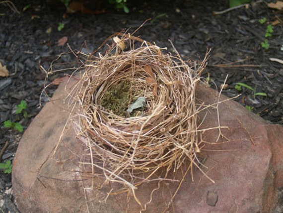 Natural Real Bird Nest for Crafts, Wreaths or Floral Arrangements