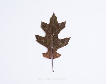 Autumn Leaf N1 - 8x10. Fine Art Photographic Natural History Print. Minimal simple style. Natural Home Decor. Indoor garden botanical