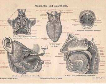 1894 mouth tongue anatomy original antique print