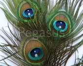 Natural Peacock Feather Eyes With Crystal rhinestone (6 Feathers)(15 color Options) DIY wedding invitations,centerpiece,brooch bouquet
