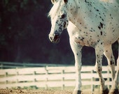 Horse Photograph appaloosa white fence pasture spots farm barn animal western country