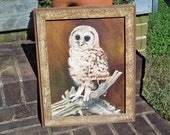 Cute signed Vintage Oil Painting of a Baby Barn Owl with Old Barn Board Frame