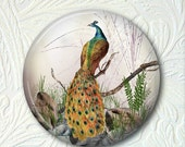 Pocket Mirror  Peacock Purse Mirror 2.25 Inch  Buy 3 get 1 Free 391