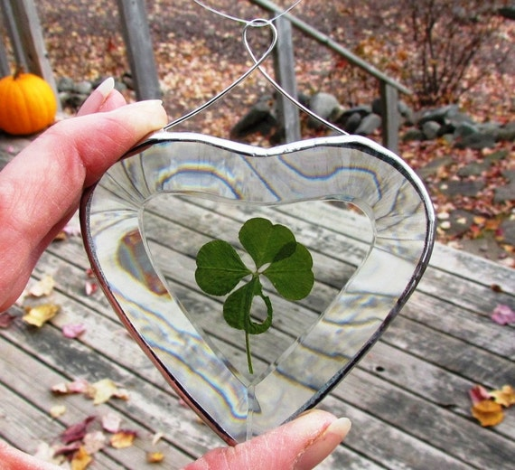 Genuine Four Leaf Clover in Clear Heart shaped Beveled Glass