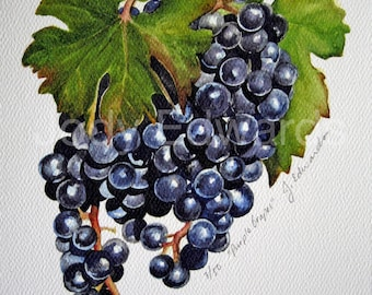 Blue Grapes Watercolor - Archival Quality Print