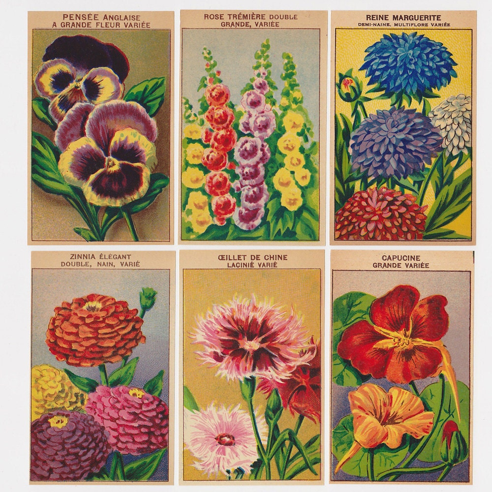 Set Of 10 Country Garden Flower Seed Wedding Favours With: 24 Vintage Seed Packet Flower Labels Set 2