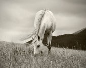 Horse Photograph in Black and White, Peaceful Day, Fine Art Equestrian Photography, Animal Print