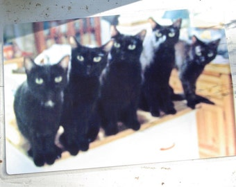 Five Black Cats Laminated Placemat