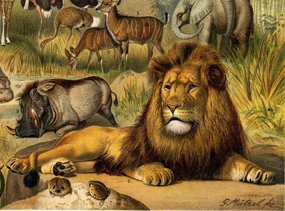 1900s Gorgeous antique ETHIOPIAN FAUNA chromolithograph, Gorilla, chimpanzee, baboon, giraffe, lion, hippopotamus, elephant