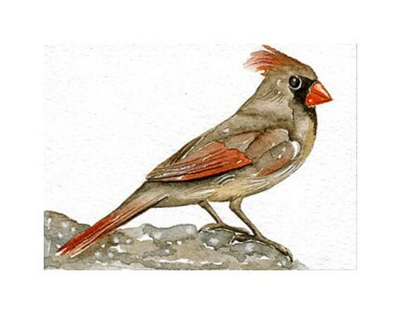Original Watercolor Art Bird - Cardinal - ACEO Painted by Lorisworld