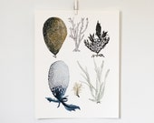 Sea Botanicals 1, 11x14 print - KatieVernon