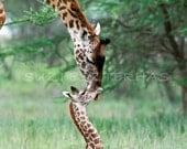 60% OFF SALE,  Giraffe Baby and Mom Photo Print, African Safari, Baby Animals, African Wildlife , Nursery Wall Art, Kids Room