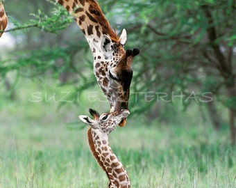 60% OFF SALE,  Giraffe Baby and Mom Photo Print, African Safari, Baby Animals, African Wildlife , Nursery Wall Art, Kids Room