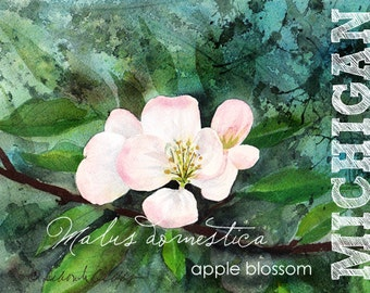 Michigan, Watercolor ACEO, State Flowers, Apple Blossom, Malus domestica