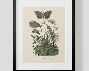 Butterfly Plate 409