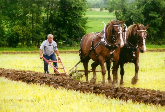 Horse Photography Draft Horses and walking Plow by ... - photo#11
