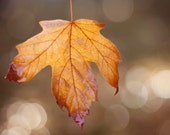 Fall Leaf Photograph, Woodland, Nature Photography, Rustic, Bokeh, Brown, Natural, Orange, red, Leaf Photograph, 8x10