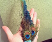 Lovely bright sparkly peacock feather clip