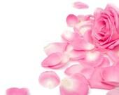 Rose Petal Witch Hazel - 4oz - All Natural Facial Toner - Alcohol Free - Paraben Free Product