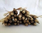 5 Bundles Plain Lead Twig Pencils - Rustic Wedding Guest Favors, Children Wedding Activity, Children Wedding Favor, Wedding and Party Supply