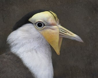 Masked Lapwing 8x10 Fine Art Print - Nature, Bird, Black, White, Yellow