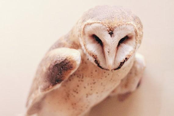 Barn Owl Fine Art Photography animal photography bird art print, Owl Print, Owl Photography Cream, Barn Owl Art Print