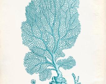 Vintage Sea Fan Coral Print 8x10 P195