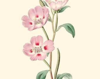 Vintage Pink Flower Print 8x10 P214