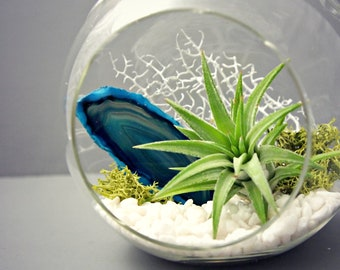Turquoise Agate Mineral Air Plant Terrarium