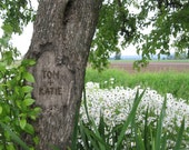 Personalized Tree Carving on Photo - In a Field of Daisies (JPEG) Digital IMAGE for YOU to print - Your names carved on this tree image