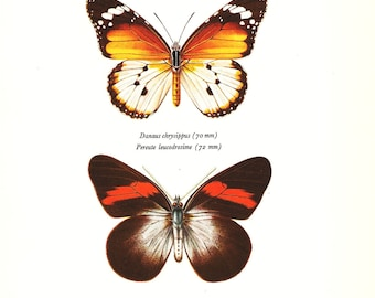 BUTTERFLY PRINT Art Original 1965 Book Plate 30 Beautiful GOlden Danaid and Kollar Butterflies Garden Flower Nature Home Decor