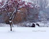 Christmas, Winter, Holiday Decor, Red, Purple, Snow, White, Tree- 8x10 Print  -  Nature Photography