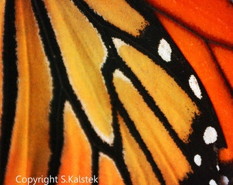 Butterfly Photograph Monarch Butterfly Wing Bold Modern Abstract Orange Yellow Black Wall Decor 8x8