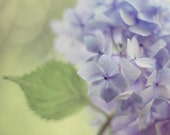 Flower Photography, Hydrangea Print, Lavender Purple Wall Art, Sage Green, Botanical Print, Floral Home Decor, Hydrangeas 8x10, 11x14 - AmyTylerPhotography