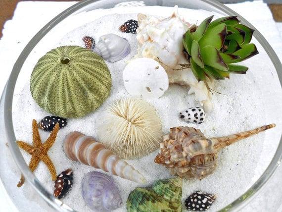 DIY Terrarium Kit,  Beach and Succulent Dish Garden,  Housewarming Gift