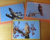 California hawk trio: set of note cards with 4 x 6 prints
