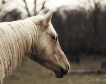 Horse Photography Horse Art 8x12 Print