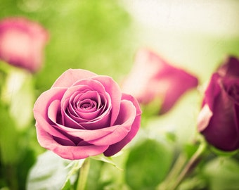 """Flower Photography - rose pink green white floral photo artwork nature spring print botanical - 11x14, 8x10 Photograph, """"The Rose Garden"""""""