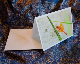"One single, 5 1/2 x 7 3/8 Blank Photo Notecard with Envelope, ""Dragonfly"""