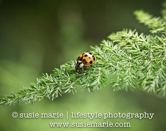Ladybug - Macro Nature Photography Print