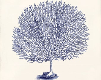 Antique Blue Coral Art Print - 8 x 10 - Natural History - Sea Fan 2 Deep Blue