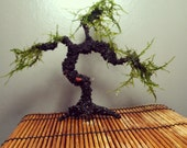 AQUA BONSAI small