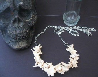 Real Animal Vertebrae Necklace (Large vertebrae) Genuine Vertebra, Real Bone Necklace
