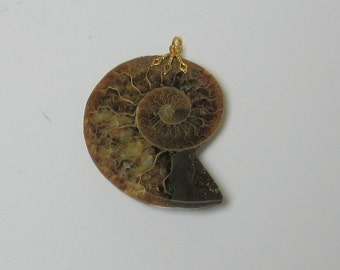 Pendant Made From a Shell Fossil