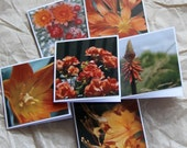 Orange flowers photo Cards (6 mini cards) / flower mini cards / pink flower mini cards / yellow flower mini cards