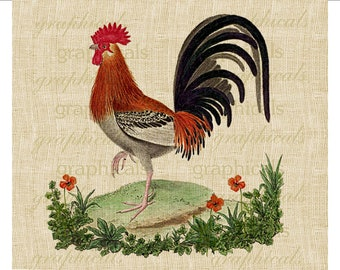 Vintage rooster French chicken orange poppies flowers digital download for fabric transfer burlap decoupage pillows No. 533