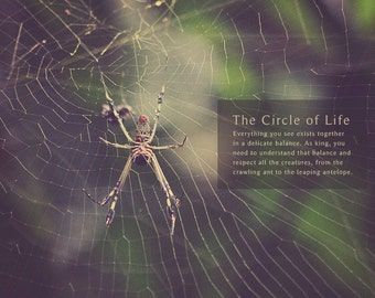Spider Web, Spider Photo, Spider Photography, Spider Art, Spider Print, Spider Lover, Spider Gift, Spider Web Art, Spider Web Photo