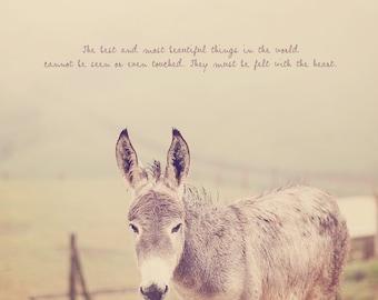 Donkey Photo, Typography Photo, Donkey Print, Donkey Art, Donkey Gift, Donkey Photography, Donkey Decor, Cute and Cuddly, Nursery Art